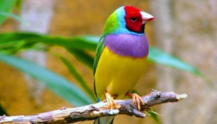 Venezuela, destino inigualable para el turismo de observación de aves