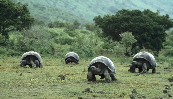 """Islas Galápagos, el secreto de este """"Parque Jurásico"""" en medio del océano"""
